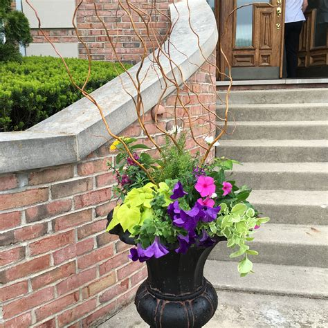 Pin by Daisy on Container Gardening | Container gardening